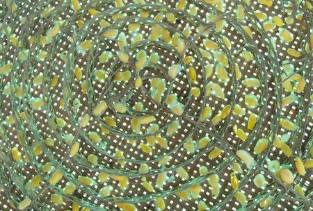 cocoon: silkworm cocoon pattern