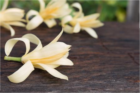 originate: Close up white Champaka on wood background , originate Thailand