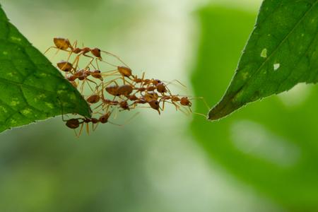 Stojąca akcja mrówka. Zespół jedności mostu