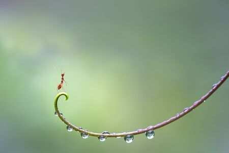 Ant action standing on hand of plant with water drop.,Concept team work together protection
