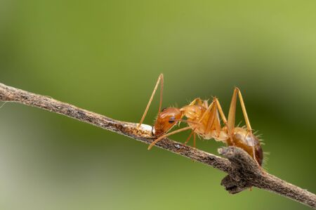 Ant action standing.Ant working on branch dry wood,macro photography for natural background