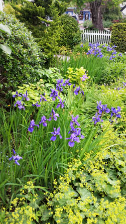Flower bed with yell and blue flowers & picket fence