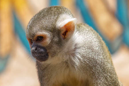 Monkey With Bright Background