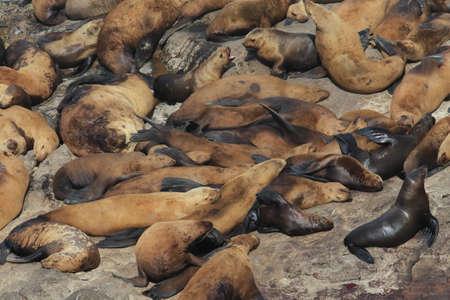 Sea Lion Caves - Florence Oregon USA 스톡 콘텐츠