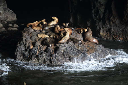 Sea Lion Caves - Florence Oregon Coast USA