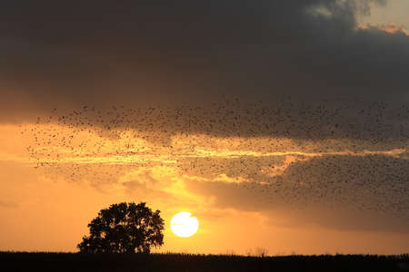 Star swarm in the sunset Germany