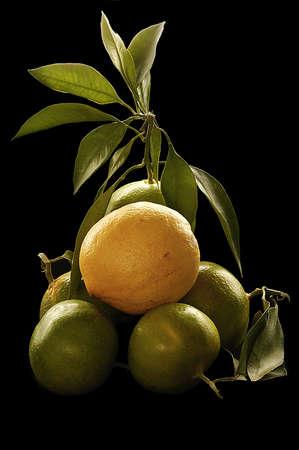 Gruene Limetten und einegelbe  Zitrone als Stilleben. Stock Photo