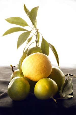 Gelbe Zitronen und gruene Limetten als Stillleben Stock Photo
