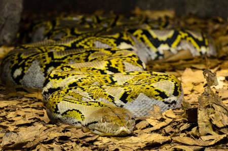 Large snake with great texture and color