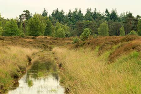 heathland: Small stream of water running through heathland area