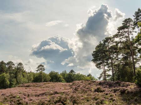 heathland: Colorful heathland scene with a dramatic cloud hanging overhead Stock Photo