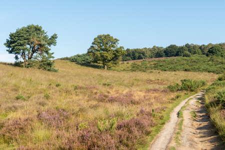 heathland: Path leading through hills in dutch heathland