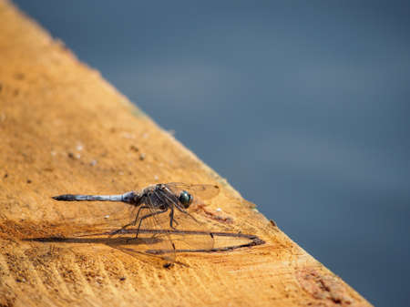 Dragonfly resting gracefully on wooden bank by river photo