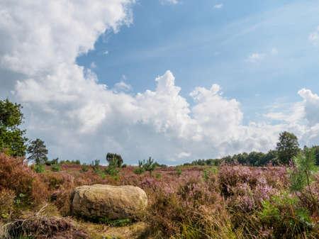 heathland: Large boulder provides foreground element for this heathland hillside in full bloom