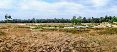 heathland: Wide panorama of a Dutch piece of heathland Stock Photo