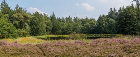 panoramic sky: Wide panorama of Dutch heathland with a small lake and forest behind Stock Photo