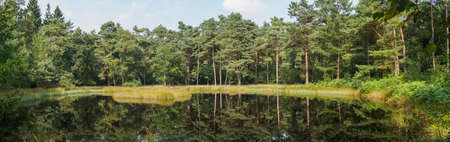 Panorama of a Dutch forest reflecting in a lake Stock Photo