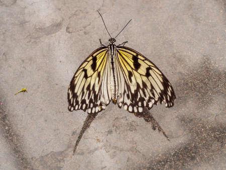 Geel papier kite vlinder met reflectie op marmer Stockfoto