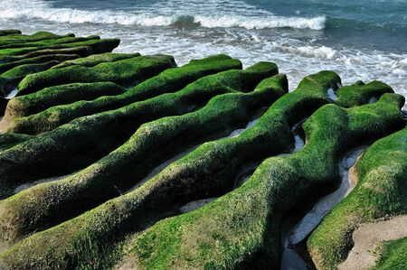 incredible: Laomei Green Reef is a beach become famous by incredible wave-cut volcanic lava covered with green seaweeds   Mar  25, 2012  Stock Photo
