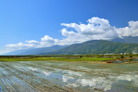 rift: Water flooded rice fields with the reflection of brilliant white clouds at East Rift Valley,Hualien county,Taiwan  Feb  3, 2009