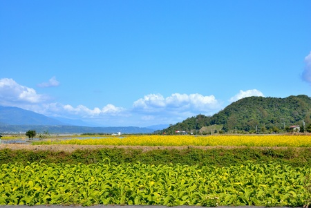 rift: Tobacco fields on the East Rift Valley  Hualien,Taiwan   Feb  3rd, 2009  Stock Photo