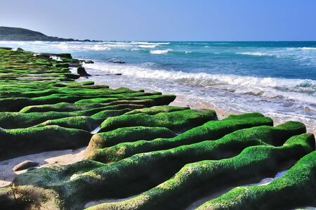 seaweeds: Laomei Green Reef is a beach located at north coast of Taiwan, now it become famous because of its incredible wave-cut volcanic lava covered with green seaweeds   New Taipei City, Taiwan  Stock Photo