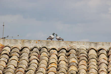 Photo of a pair of doves