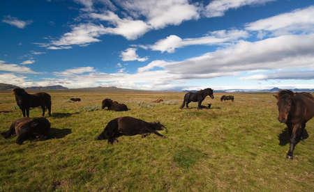 island�s: Island�s caballos