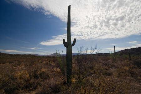 pipe organ: Organ Pipe Cactus National Monument, Arizona