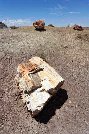 Petrified Forest National Monument photo