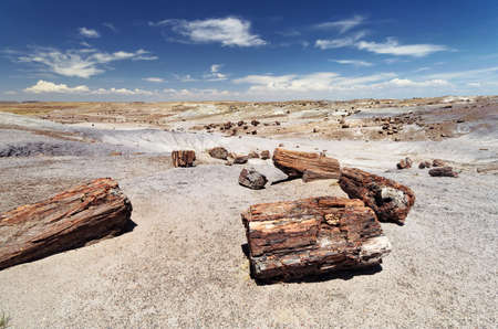 petrified fossil: Petrified Forest National Monument