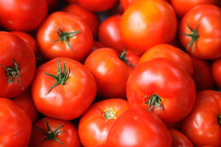 Fresh red tomatoes Stock Photo - 5248257