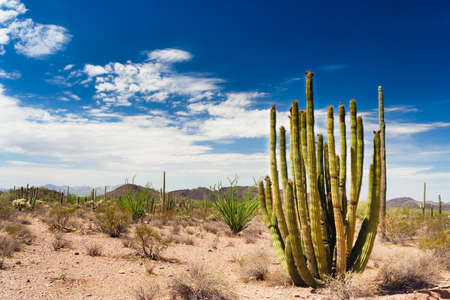 saguaro: The national monument is far from other popular tourist sites and is relatively little visited.