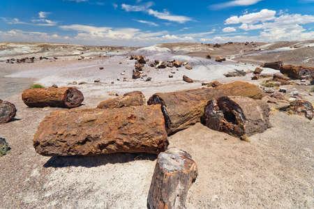 petrified fossil: Petrified wood in the Petrified Forest National Park Arizona