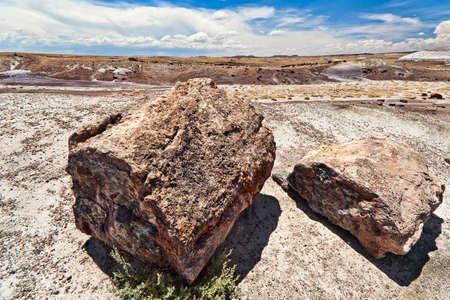 Petrified wood in the Petrified Forest National Park Arizona photo