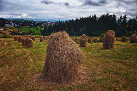 Hay in stacks in Tatra mountains, Poland photo