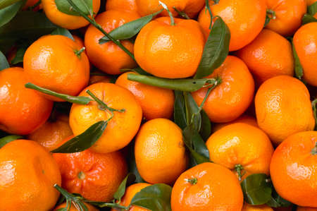 Clementines, a variety of mandarin orange Stock Photo - 12929217