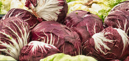 Lots of radicchio heads  Cichorium intybus, Asteraceae  Stock Photo