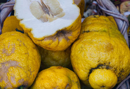 Cedrat Fruit  Properly the citron, a variety of Citrus medica, with large fruits, not acid, and having a high perfume Stock Photo - 13041077
