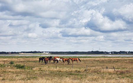 jutland: Wadden sea in Esbjerg, Denmark. Landscape with horses.