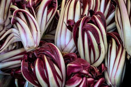 Red radicchio lettuce, salad photo