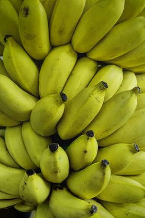 Rows of ripe yellow bananas Stock Photo - 17477796