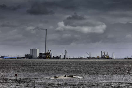 Panorama of Esbjerg oil harbor with seals in the foreground, Denmark photo