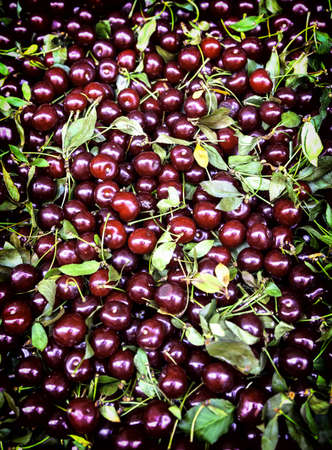 Sweet cherries in a group  Background Stock Photo - 20918748