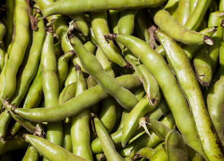 Fresh Fava or broad bean background, texture or pattern photo