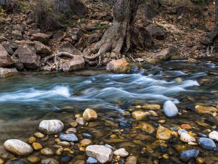 narrows: Creek in the Narrows in Zion national park, Utah