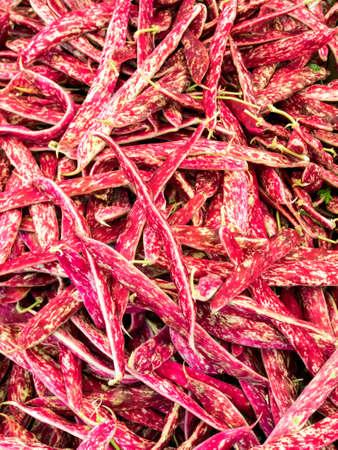 borlotti beans: Raw and red borlotti beans, fresh