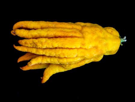 Buddhas hand cedrat citrus lemon