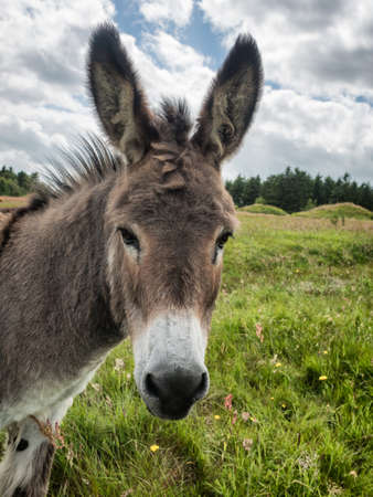 Donkey, very nice and cute on a green field