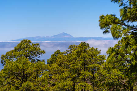 View from the Tamadaba forest on Gran Canaria to the Pico de Teide on Teneriffa 版權商用圖片